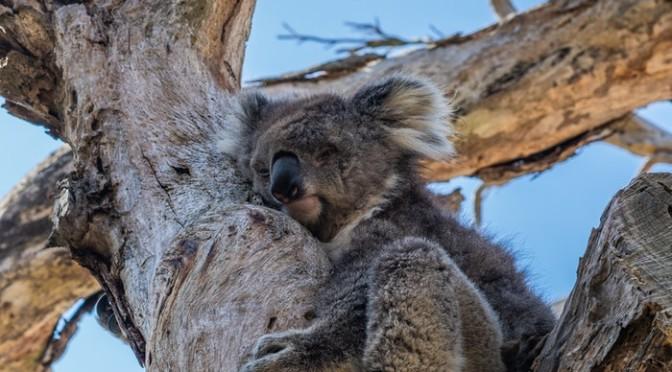 Warrandyte State Park Melbourne, Australia